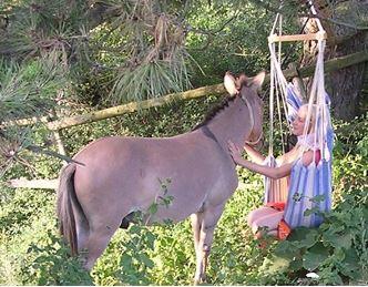 Titania und der Esel